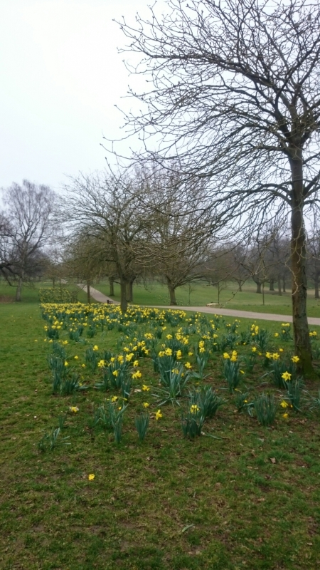A whole carpet of daffodils!!!