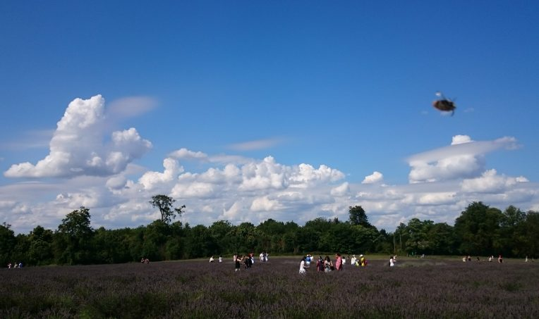 Visitors enjoying lavender and clouds for miles