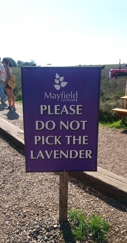 Mayfield Lavender Farm - Please Do Not Pick The Lavender
